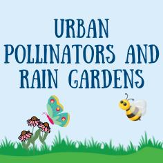 Urban Pollinators and Rain Gardens